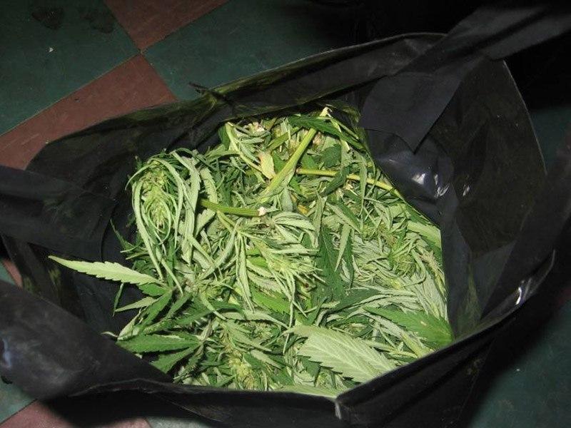 300 гр марихуаны семена канабиса саратов